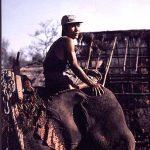 elephant1_lg