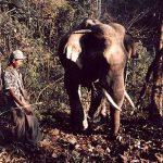 elephant2_lg